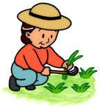 草むしりによる腰痛