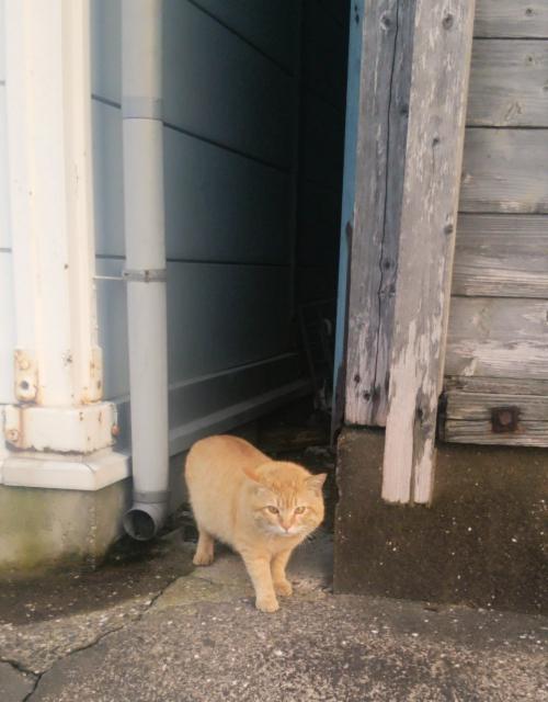 リンパマッサージポスティング♪本日のお猫様。