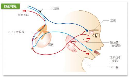 鍼灸と顔面神経麻痺