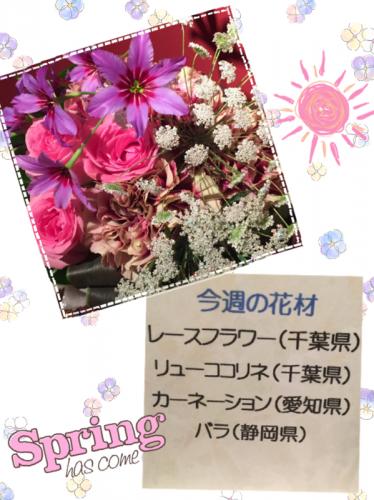 春ですね~かわいいお花たち!
