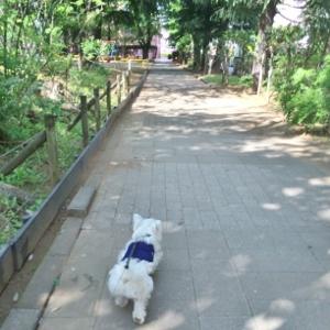 公園のお散歩