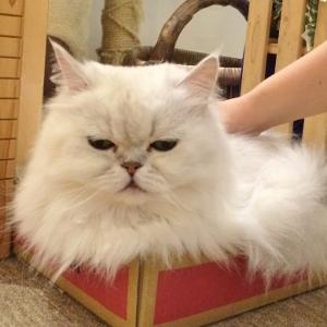 気持ちいいニャー 猫ちゃん