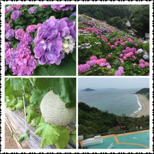 伊良湖☆メロン☆紫陽花
