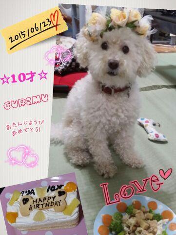★愛犬 ̄(=∵=) ̄誕生日★