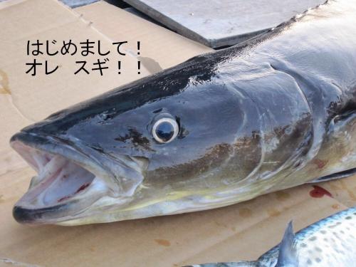 すぎってこんな魚