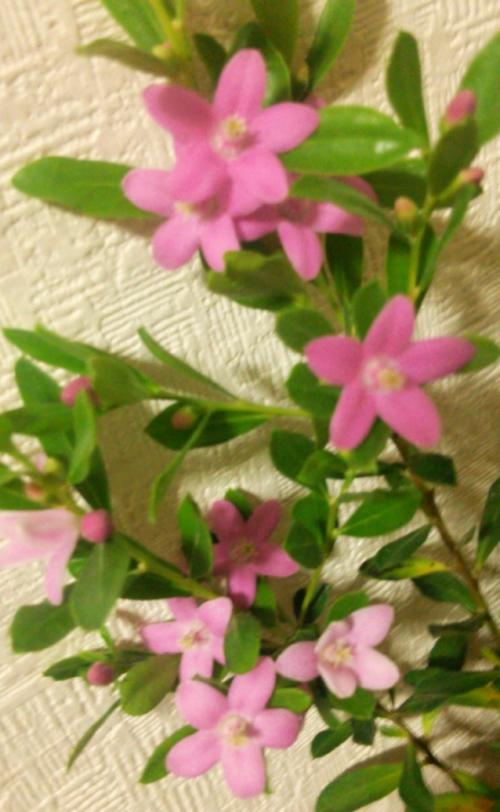 エステサロンのお花【サザンクロス】