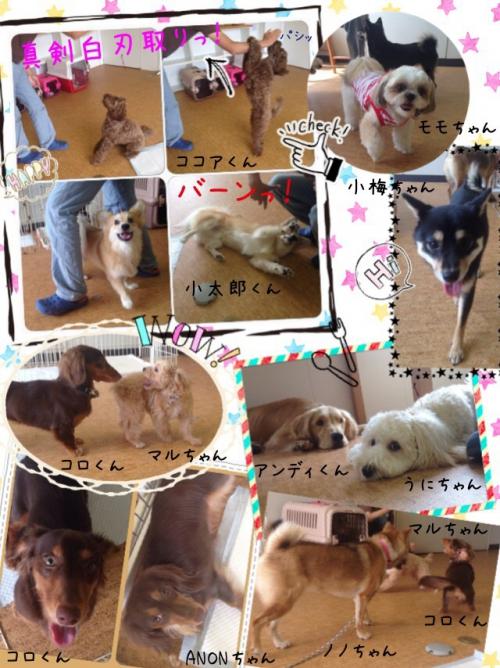 西船橋から6分の犬の保育園