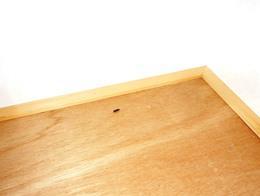 アパート・マンションのクロゴキブリの駆除実施