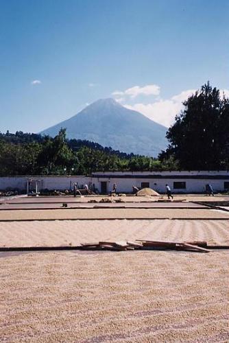 グァテマラアンティグアSHB《アゾテア農園》