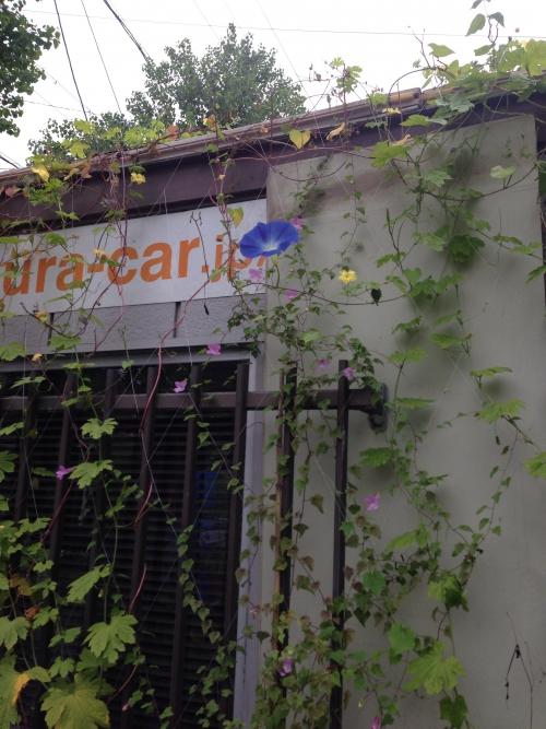 名古屋市の自動車板金塗装屋です。^_^