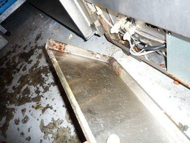 食器洗浄機内部のチャンバネゴキブリ