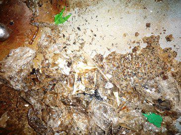 厨房機器下がチョウバエの幼虫の発生源