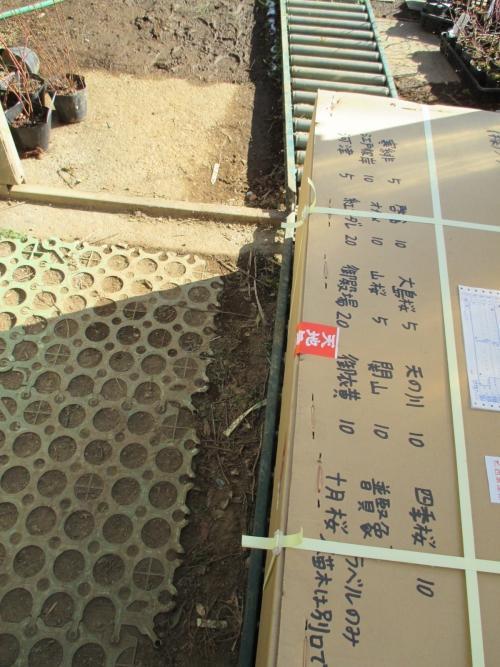 桜100種類!川口市安行より、桜の植木苗木の販売!