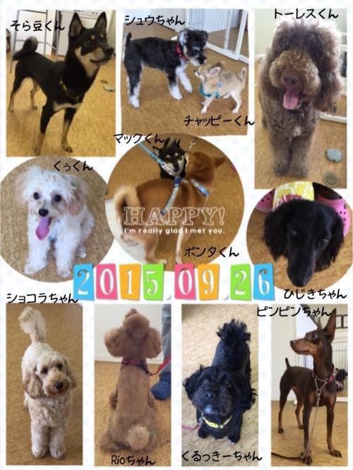 犬の保育園 市川は全エリア送迎可能!