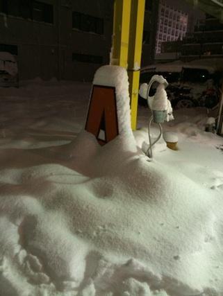大雪だぁ(*_*)パート4