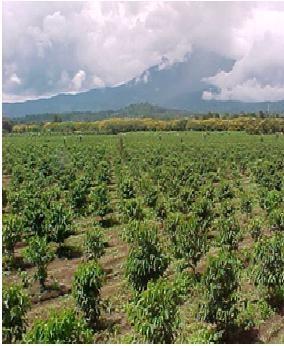 アメリカンコーヒー発祥の地