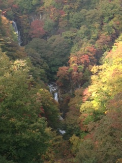 霧降の滝の紅葉が始まりました