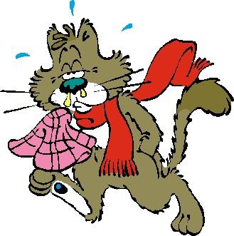 犬猫の東洋医学での病気の原因の風邪のつづきの話