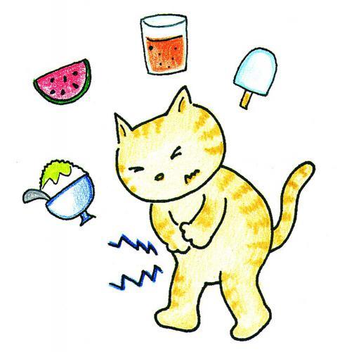 犬、猫の東洋医学での病気の原因の暑邪について