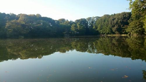 石神井公園にお散歩
