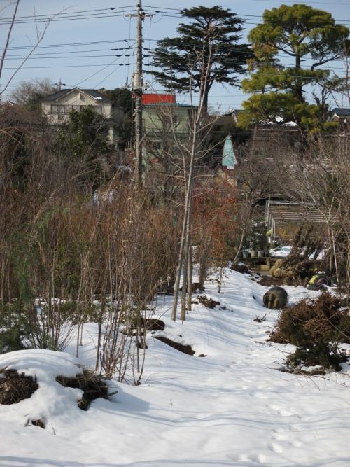 雪の植木屋さんな景色、白い植木畑!