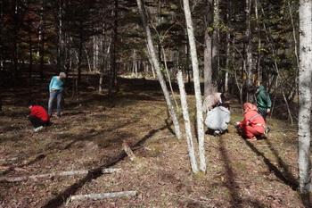 登り窯の休憩時間のキノコ狩りの様子です。