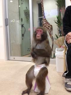 待合室でお猿さんがマイ椅子で、、、