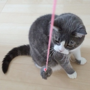 猫ちゃんの出張シッター  大好きなこと