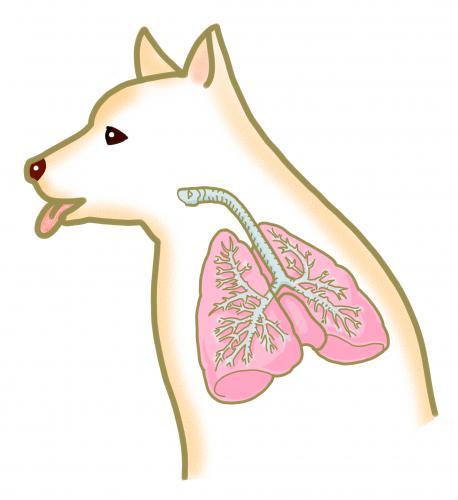 犬、猫の呼吸器系の症状が前肢の痛みとなって現れること