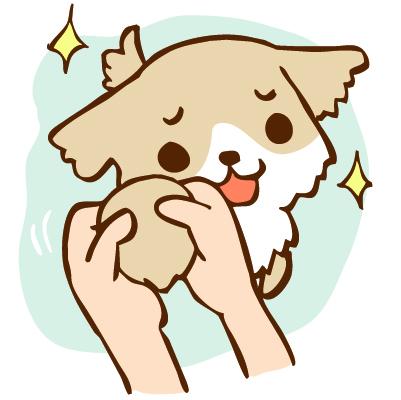犬、猫の小腸の異常が前肢や肩、首に出る
