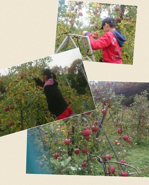 長野上田にて、リンゴ狩り