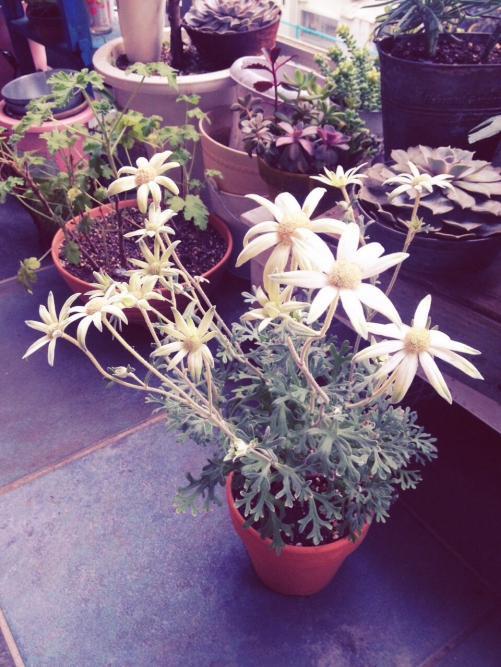 お花も好きなんです☆