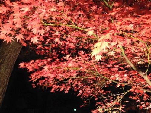 お休みをありがとうございました。秩父の紅葉です。