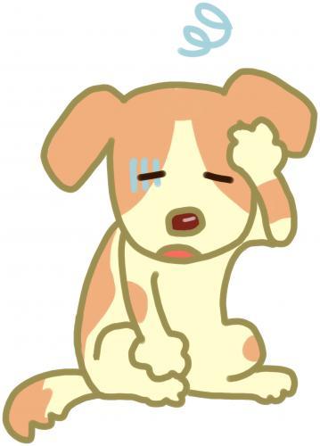 犬、猫の全身的なかゆみ