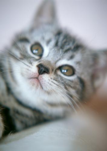 一般的な猫の甲状腺機能亢進症の治療について
