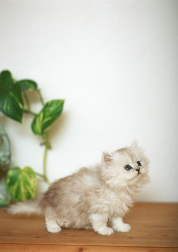 一般的な猫の甲状腺機能亢進症の治療の続きの話