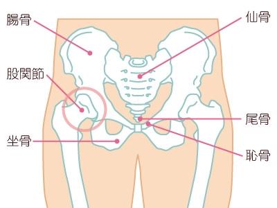 股関節周囲の痛みと姿勢の関係