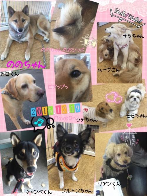 船橋 津田沼エリア 訓練付き 犬の保育園
