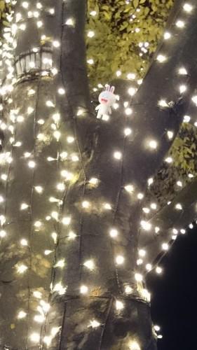 ♪☆Merry Christmas☆♪