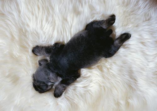 犬猫の肝臓の値が上がっているときに考える肝臓の病気