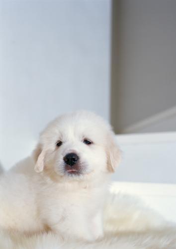 犬猫の肝臓の値が上がっている時にどのように考えるか