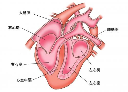 犬猫の肝臓の値が上がっている時にどのように考えるか5