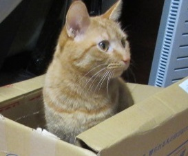 箱好きの猫ちゃんです。
