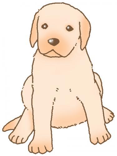 犬の特発性慢性肝炎について