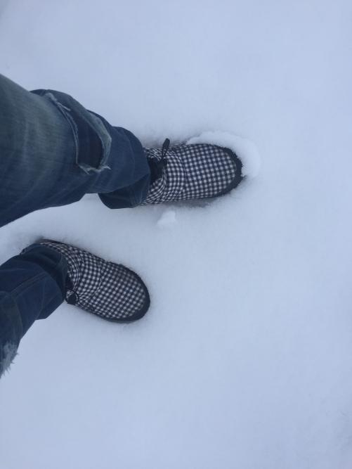 雪降る新潟調査はちょっと大変です
