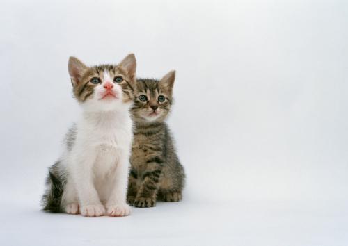 猫の肝臓の病気、肝リピドーシスの治療の続きの話