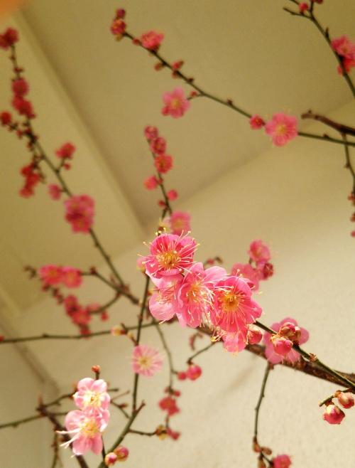 立春♪デトックスリンパマッサージで春の用意