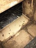 ダンボール箱は恰好のゴキブリの巣となる