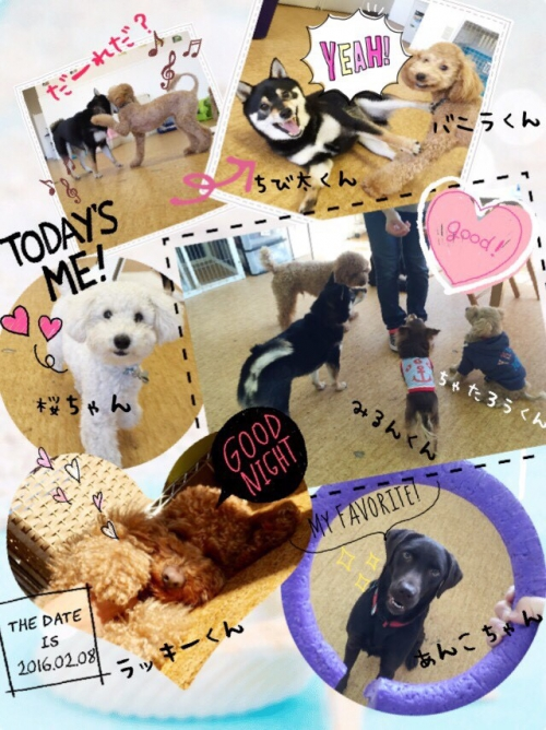 オーストラリアの犬事情から日本を見てみる