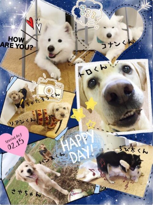 ロシアの犬事情から日本を見てみる